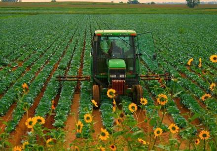 Отглеждане на земеделска продукция в община Аврен - Кооперация в Аврен