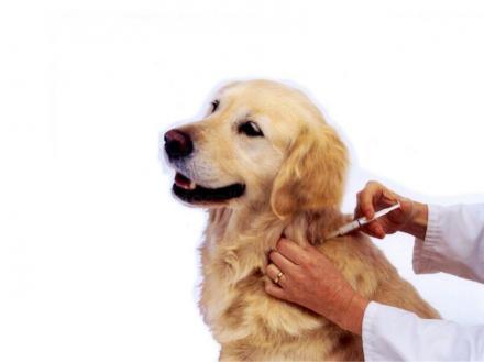 Поставяне ваксина на кучета и котки Казанлък - Анималс Лайф ЕООД