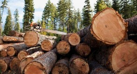 Продажба на дървесина в Силистра - Глобал Текх
