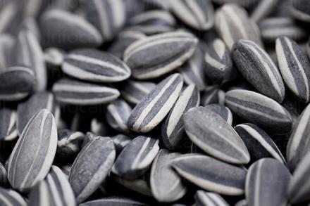 Продажба на семена за слънчоглед в Долни чифлик-област Варна - Агрощил България