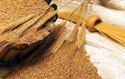 Производство на пшеница в община Силистра - Казимир 93