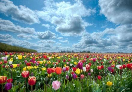 Производство на разсад за цветя в Каспичан и Шумен - Калинка Панайотова ЕТ