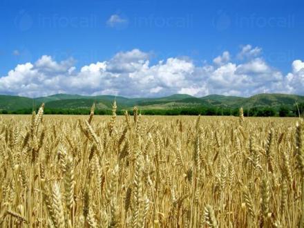 Производство на селскостопанска продукция в Хърлец-Козлодуй - ПТЗК Аугуста