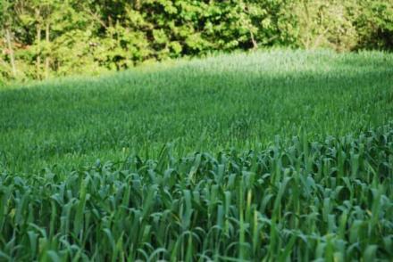 Производство на царевица и ечемик в Нови пазар - Виван ЕООД