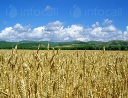 Производство на земеделска продукция в община Силистра - Казимир 93