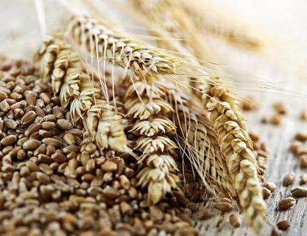 Производство зърнени култури в Нови Пазар - Агрострой ЕООД