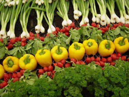 Реализация на селскостопанска продукция в област Търговище - Дърводобив Търговище