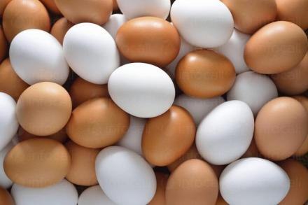 Търговия с яйца Мейбъл и Кармен в област Търговище - Яйца и Птици Ломци