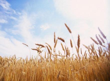 Търговия със селскостопанска продукция Дулово - БРЕВИС ЕООД