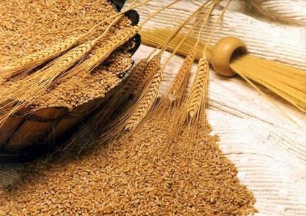 Търговия със селскостопанска продукция Каменец-Пордим - Селскостопанска продукция Пордим