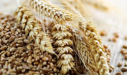 Търговия селскостопанска продукция в Долна Студена-Русе - Земеделска кооперация Русе