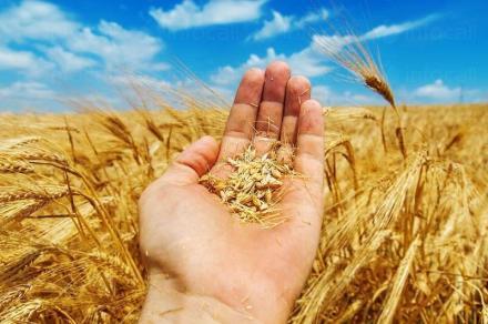 Търговия зърнени култури в община Димитровград - ЗКПУ Ябълково