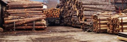 Транспорт на дървен материал в Сандански - Дървен материал Сандански