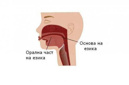 Тумори на езика - Професор д-р Спас Консулов