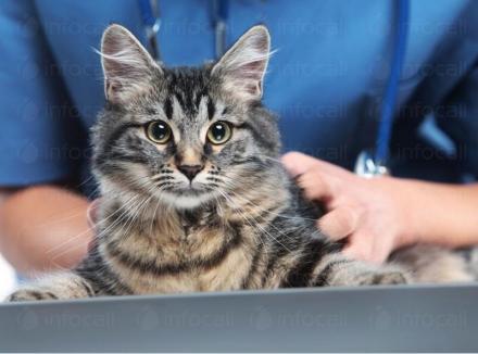 Ваксиниране на животни в Поморие - Ветеринарен кабинет Д-р Сандев