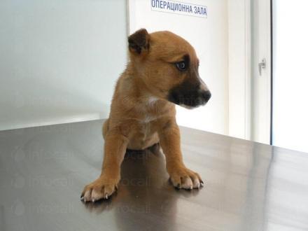 Ветеринарен хирург в Поморие - Ветеринарен кабинет Д-р Сандев