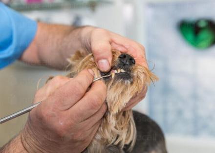 Ветеринарен стоматолог в град Поморие - Ветеринарен кабинет Д-р Сандев